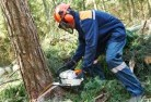 Alexander Heights Tree cutting services 21