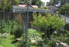 Alexander Heights Vegetable gardens 12