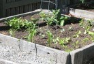 Alexander Heights Vegetable gardens 14