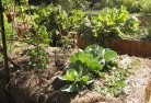 Alexander Heights Vegetable gardens 2