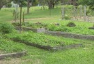 Alexander Heights Vegetable gardens 5