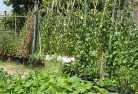 Alexander Heights Vegetable gardens 6